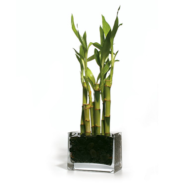Best plant for my office desk anandtech forums Best small office plants